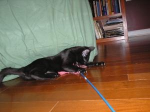 Bonus kitty likes to play