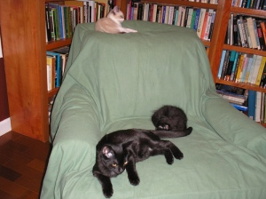 Kitties on the chair