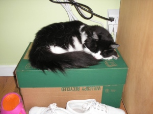 Why I keep a box under my desk 2