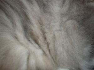 Sally fur