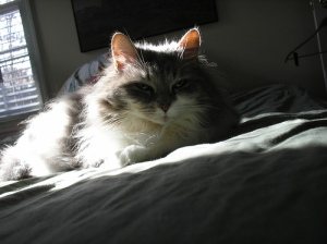 Sally in sunlight
