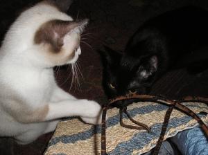 Loki and Bou inspect my knitting bag