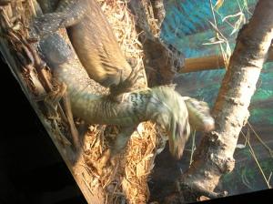 Baby komodo dragons