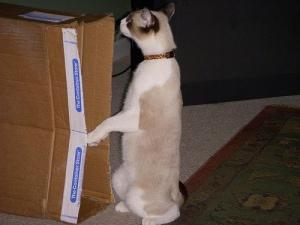 """Loki says """"Boxhab?"""""""