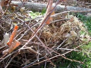 Squirrel's nest interior