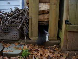 Sukey looks into the woodpile
