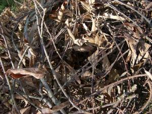 Squirrel's nest exterior