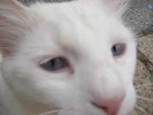 Neighbor cat says hi