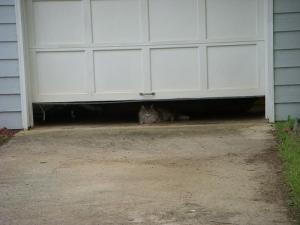 Neighbor cat does not say hi