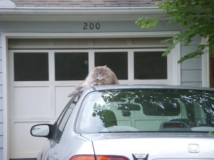 Neighbor Cat wants the keys