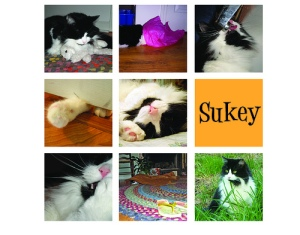 It's Sukey!