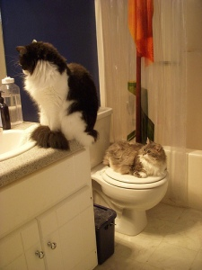 Just turn the sink on already.