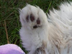 Low five! (a celebratory hind leg)