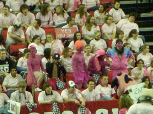 Pink fans + pink cow