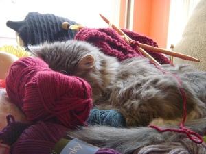 ...by keeping my yarn warm