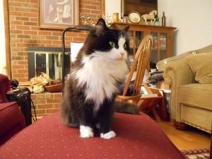 Host cat Scout