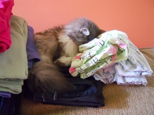 Sally helps with the laundry